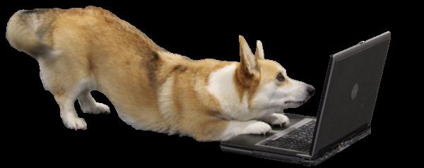 Hundeskolen Online