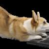 Online hvalpetræning